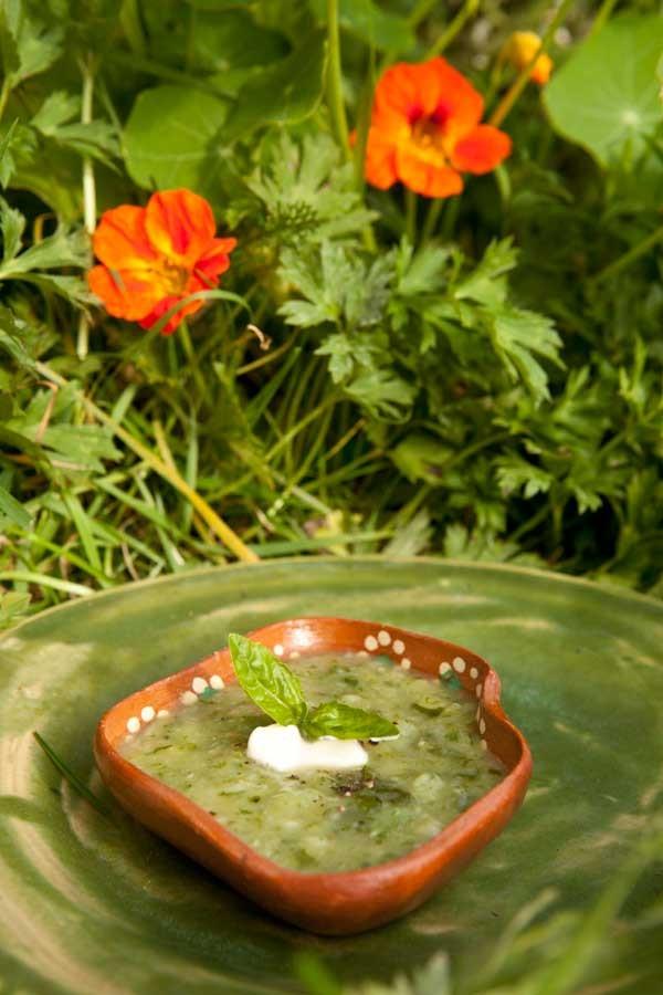 Letnia Kuchnia Cuisine Herbes Pesto