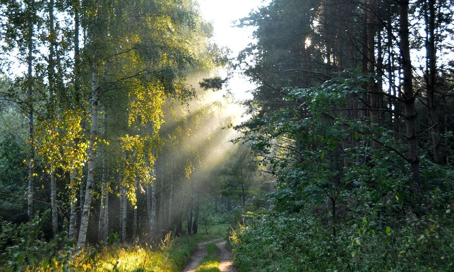 Around Letnia Kuchnia : Forest in Warmia Poland