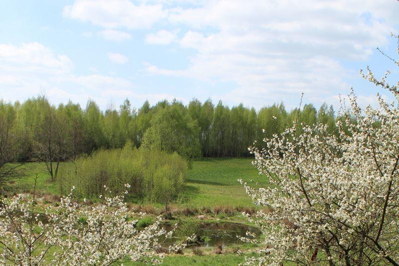 Vue sur la forêt et la prairie de la terrasse des chambres