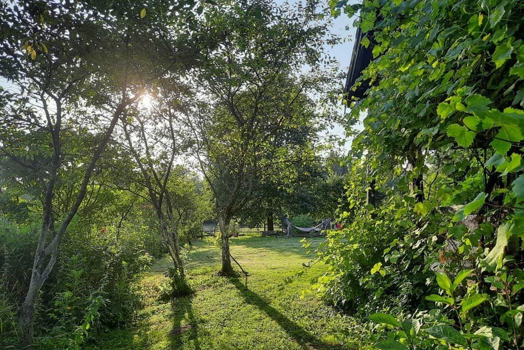 Yard and garden in summer kitchen