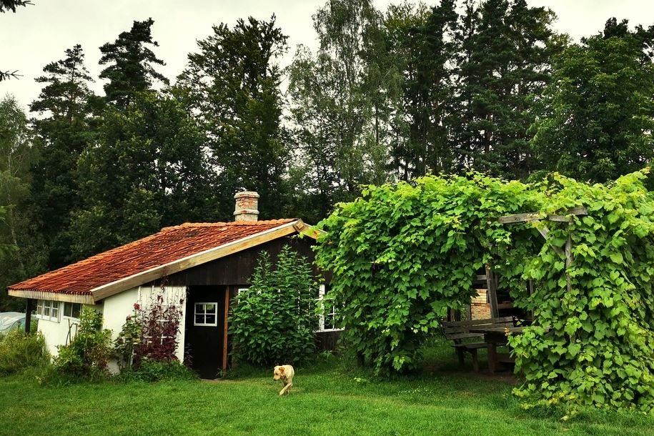 Siedlisko Letnia Kuchnia Warmia Mazury Natura Agroturystyka Las Rodzina Wakacje (63)