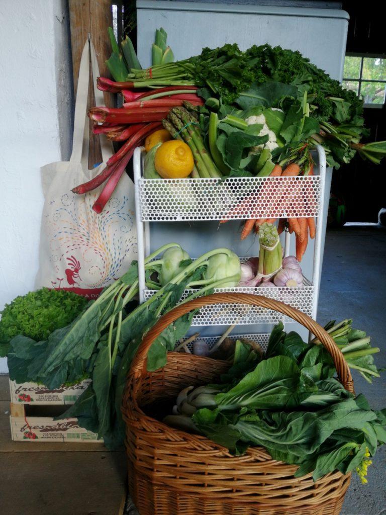 Panière de légumes frais du jardin et du marché