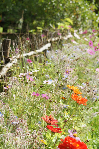 Allées de fleurs autour du potager biologique