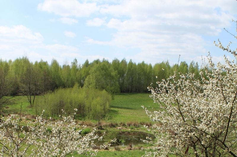 Meadow backwaters and forest in Warmia region